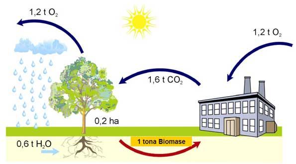 Tok kisika i ugljičnog dioksida kod izgaranja biomase